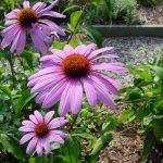 Rośliny w ogrodzie – jak stworzyć ekologiczny ogród?